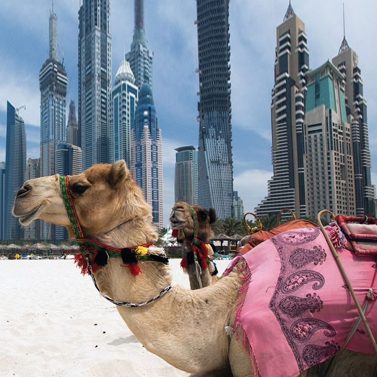 7 Nights Cruise Around the Arabian Gulf